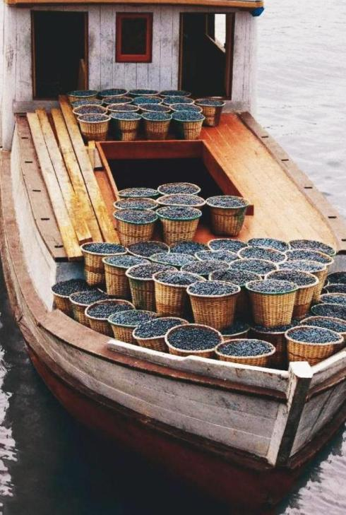 Açai berries transported by riverboat