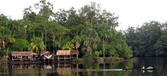 Açai - Cofruta Community